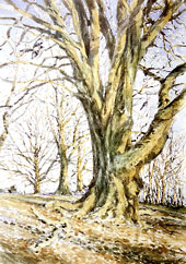 Peter Garland - Ancient Beech